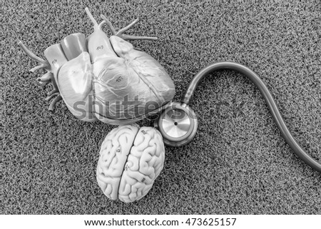 heart and brain of human model with black and white color concept