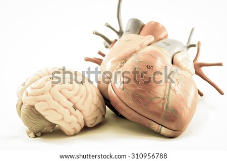 heart and brain with old color style - stock photo