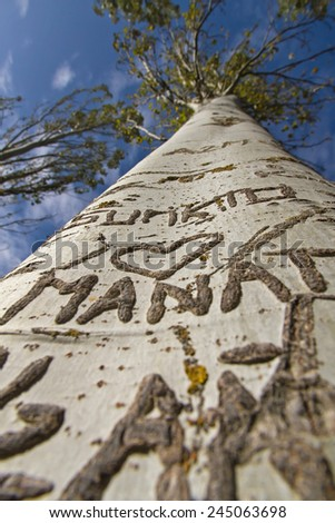 Heart and names engraved on the bark of a poplar  - stock photo