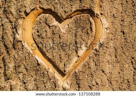 Heart carved in the bark of a tree. - stock photo
