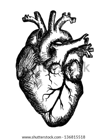 heart drawing on white background - stock photo