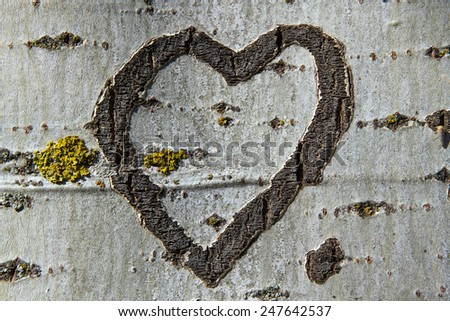 Heart Engraved on the bark of a tree