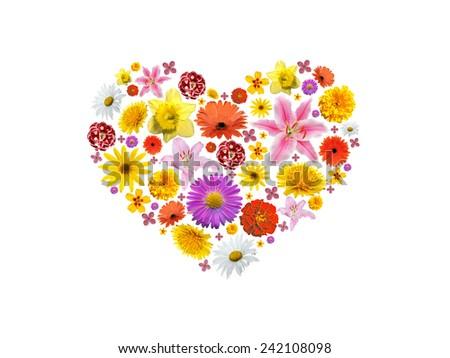 Heart flower - stock photo