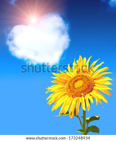 Heart from clouds and sunflower in blue sky