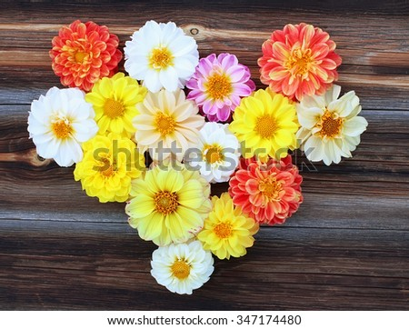 Heart from flowers of dahlias on old wooden background - stock photo