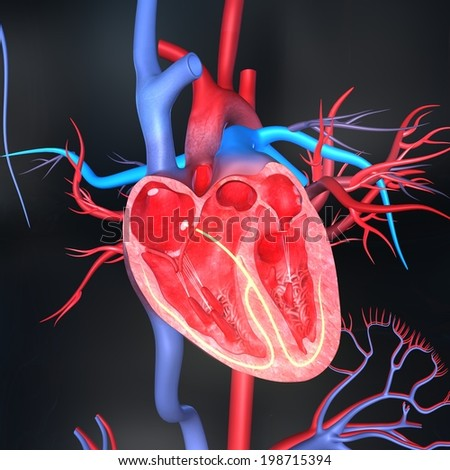 Heart intersection - stock photo