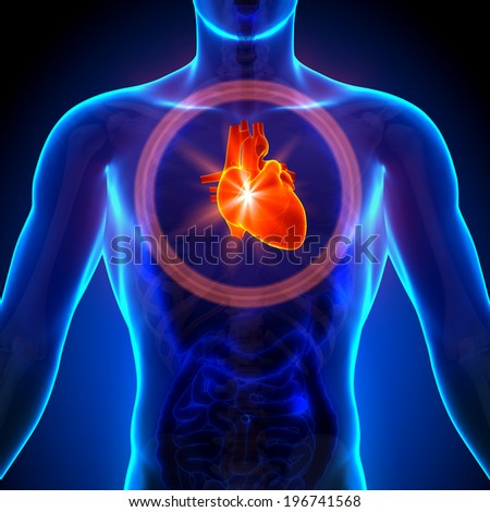 Heart - Male anatomy of human organs - x-ray view - stock photo