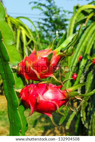 heart of a dragon fruit against the blue sky