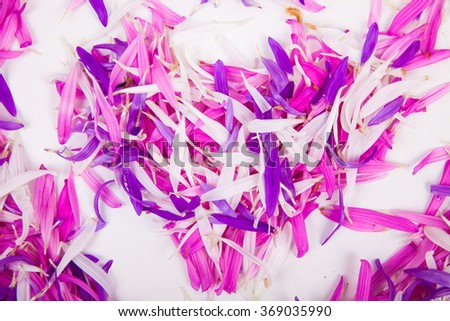 heart of aster petals - stock photo