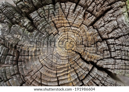 Heart of old beam - stock photo