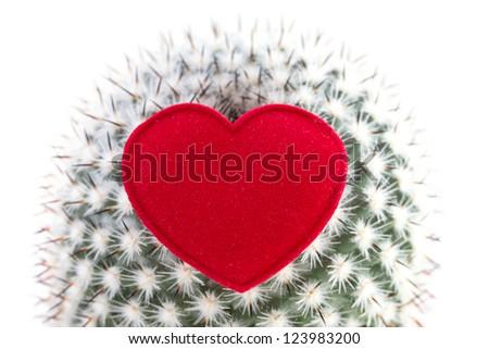 heart on cactus - stock photo