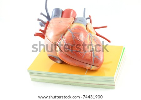 heart on the book - stock photo
