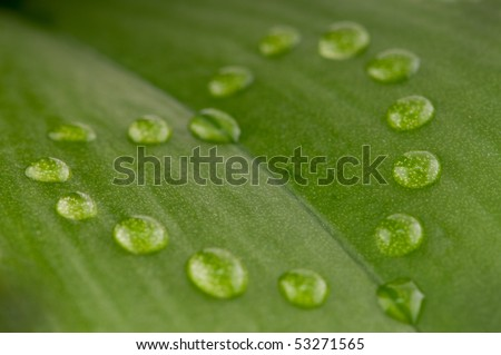 heart shape dew drops on green leaf with shallow depth of field - stock photo