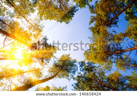 Heart shape in forest trees - stock photo