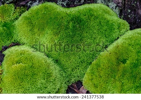 Heart shape moss cover on old stump in forest. - stock photo