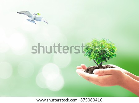 Heart shape of big tree in hands and bird flying on nature background. Eco Friendly World Environment Day Go Green Earth Hour CSR Health Care Love Spring Time Idea Life World Press Freedom Day concept - stock photo