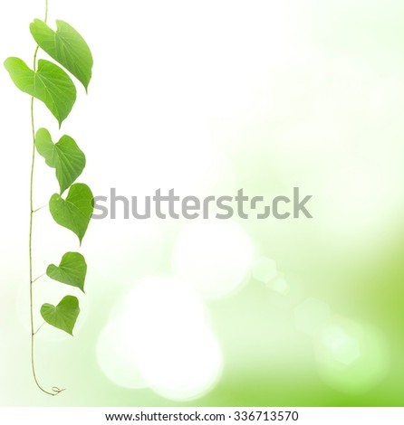 Heart shape of leaves over blurred green bokeh nature background. Valentines Day, Love, Environment, Ecology concept. - stock photo