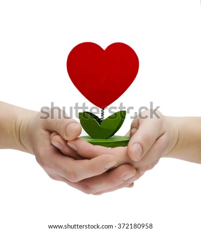 Heart shape plant in hand isolated on white background - stock photo