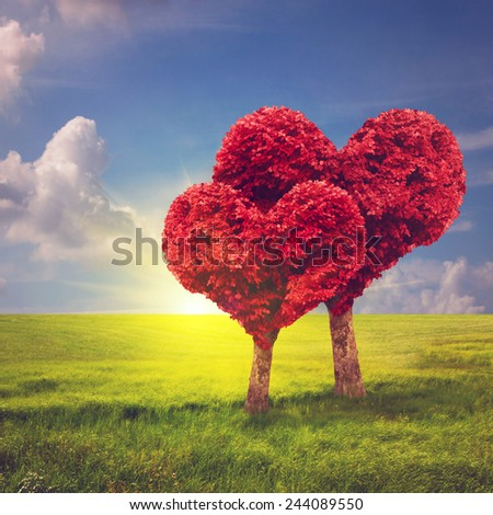 Heart shape trees. Valentine's day concept - stock photo