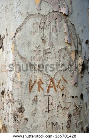 Heart shape with writing text on bark of tree, texture background - stock photo