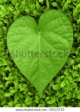 Heart shaped leaf on green background - stock photo
