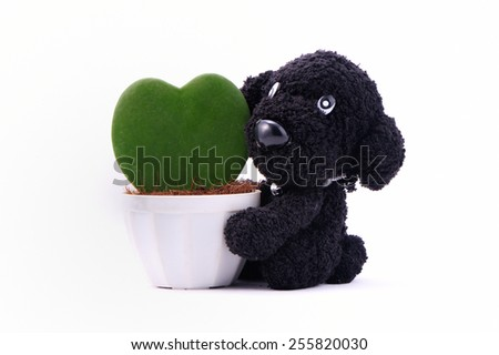 Heart-shaped plant in a flower pot with dog - stock photo