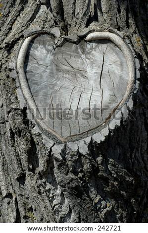 Heart Tree Trunk - stock photo