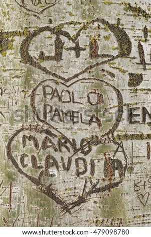 Hearts and names carved into the bark of a tree