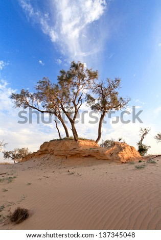 heat, the trees in a desert on a background of blue sky