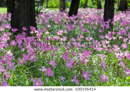 Heather and pink flowers that are blooming beautifully. - stock photo