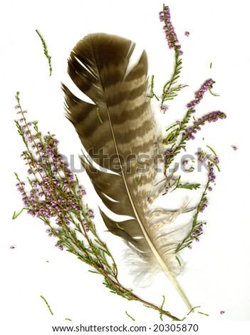 Heather bouquet and falcon plume on white background - stock photo