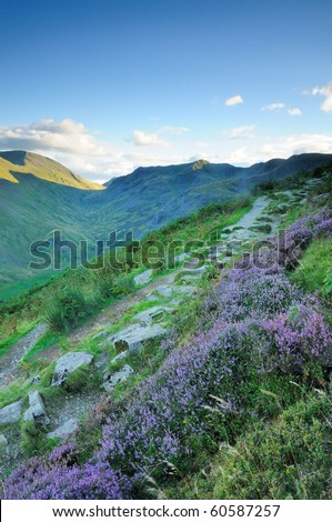 Heather by the footpath on Birkhouse Moor, English Lake District - stock photo