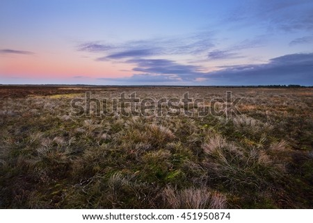 Heather field in the Netherlands - stock photo