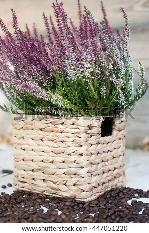 Heather in the straw basket with coffee beans on the white background - stock photo