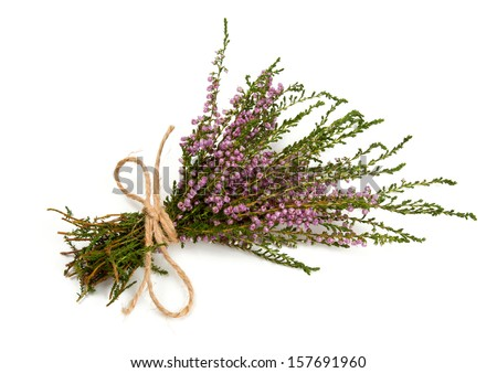heather isolated on white - stock photo