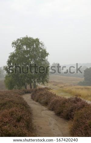 Heathlands in the early morning fog, Westruper Heide, Germany - stock photo