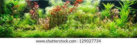 Heavily planted large freshwater aquarium - stock photo
