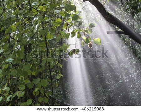 Heavy rain and sun breaking trough leaves of a forrest and producing fog and sunbeams.