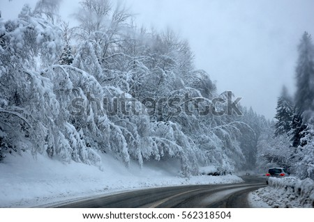 heavy snow in forest in Alps near Combloux