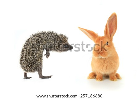 hedgehog and brown rabbit on a white background - stock photo