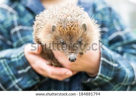 hedgehog hands - stock photo