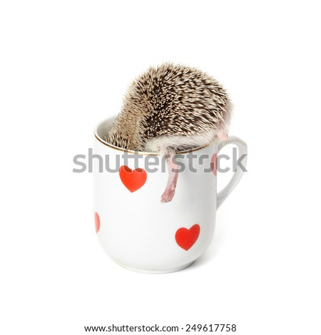 Hedgehog hides itself in the cup, but its foot is sticking out - stock photo