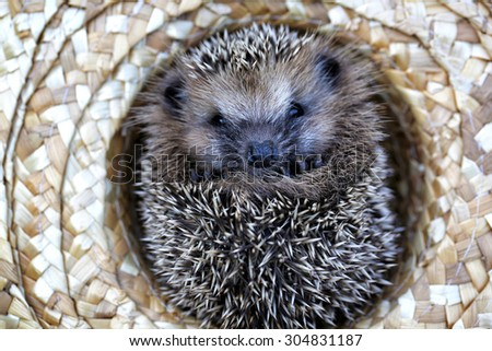 hedgehog in a straw hat autumn
