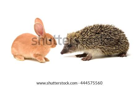 Hedgehog isolate and orange rabbit on white background - stock photo