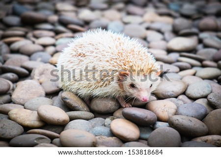 Hedgehog on stack of rock - stock photo