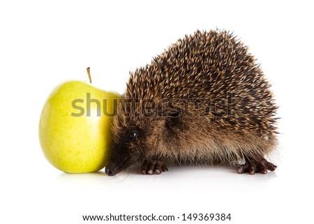 hedgehog with an apple.  hedgehog isolated. - stock photo
