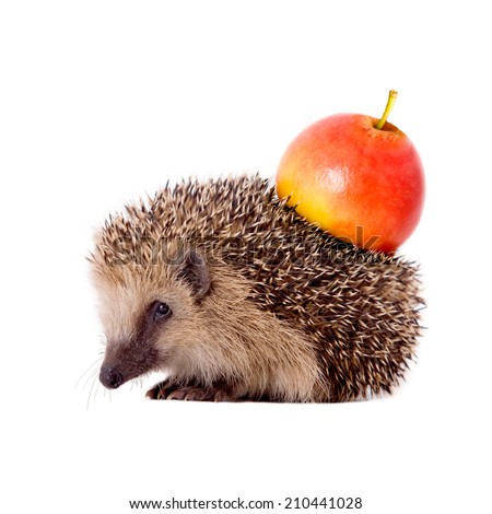 Hedgehog with apple on her back isolated on white background - stock photo
