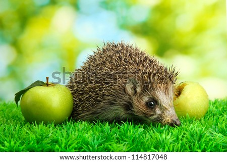 Hedgehog with apples, on grass, on green background - stock photo