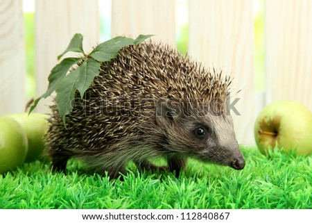 Hedgehog with leaf and apples, on grass,  on fence background