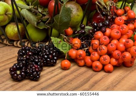 Hedgerow Fruits of Crab apple, blackberry, rose hips, elderberry and rowan berries. - stock photo